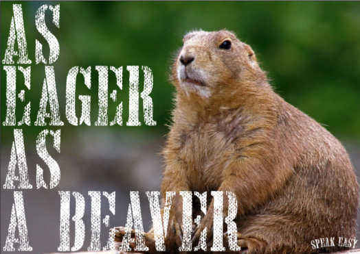 eager-as-a-beaver